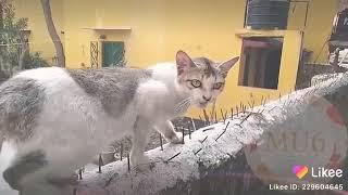 Download lagu Lagu LILY versi kucing