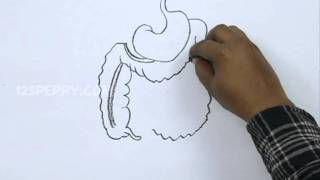 How to Draw an Abdominal Organs