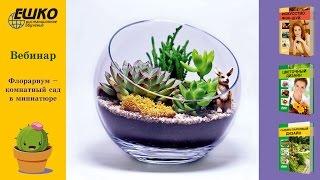 Как сделать флорариум самому. Флорариум - комнатный сад в миниатюре.
