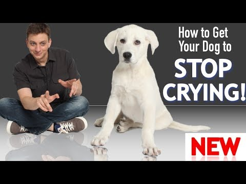 how-to-get-your-puppy-to-stop-crying-and-whining!