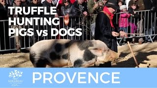 Provence Truffle Hunters: Dog Versus Pig.