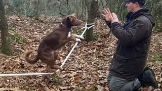 Amazing Acrobatic Dog - Slackline