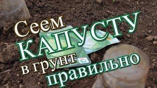 Как правильно посеять капусту в грунт. (17.05.2016)