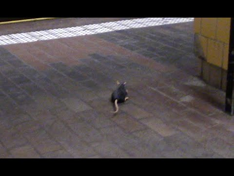 NYC SUBWAY RAT SCARE PRANK