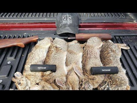 Arkansas Rabbit Hunt With Beagles