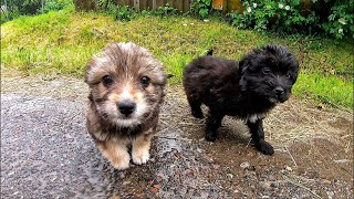 Someone Dumped these Puppies in Massive Rainstorm