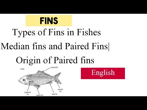 Fins: Types Of Fins In Fishes|Median Fins And Paired Fins|Origin Of Paired Fins| In English|1-Shot