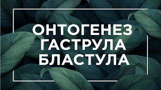 Онтогенез, бластула, гаструла | ЕГЭ Биология | Даниил Дарвин