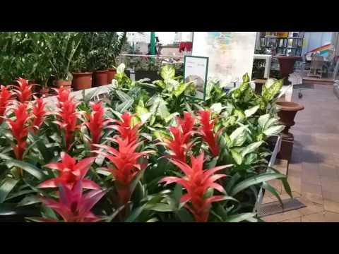 Цветочный магазин в Германии