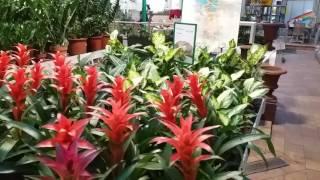 видео Цветочный магазин