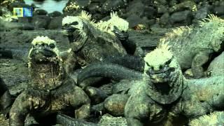 Galápagos Islands (UNESCO/TBS)