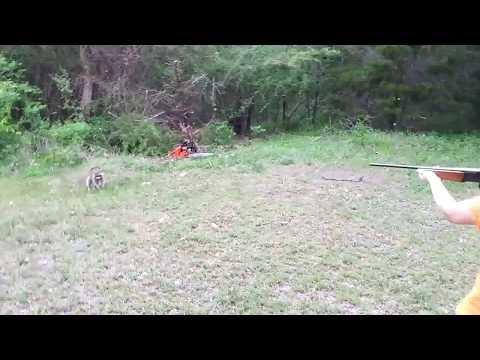 Rabid raccoon gets shot