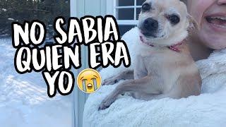 REENCUENTRO CON MI PERRITO l NO ME VEÍA HACE 7 MESES l Sofia Castro