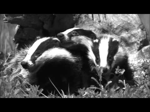 Sophisticated Badgers seventh jam session