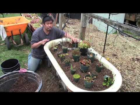 Equilibrio Carnivorous Plants Carnivorous Plant Bog Garden