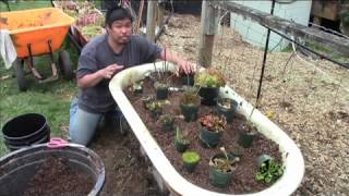 Carnivorous Plant Bog Garden