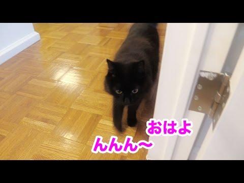 要求しておいて「いらない!」と翻すねこ Theo asks 'O-can' then says no to it.