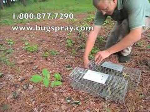 3 Squirrel Released from live traps.