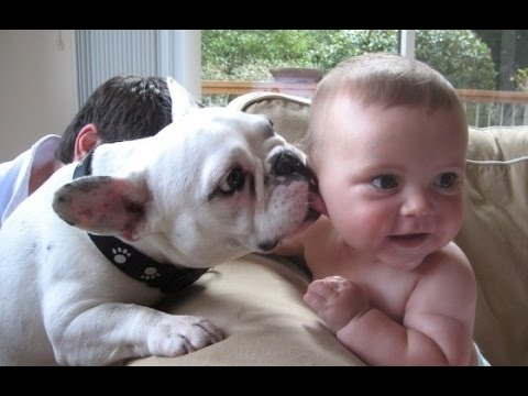 Funny Babies and Animals Video THE BEST Adorable Baby and Animals Compilation