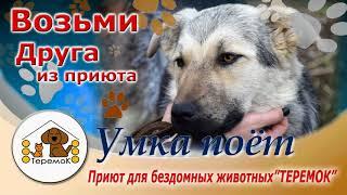 """Приют Для Бездомных Животных """"ТЕРЕМОК"""":  Умка поёт"""