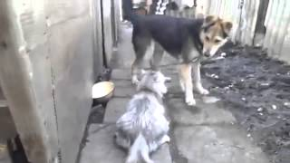 Кошки не любят собак!