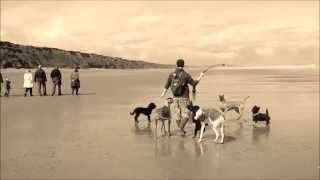 9 Lovely Dogs On The Beach - The Packs Day Out
