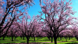 Vivaldi Spring (Full HD) Classical music