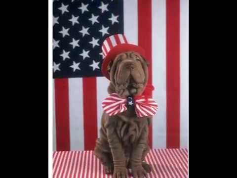 4th of July Pets in America