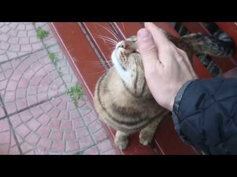 Istanbul Street Cats: Stray Cat In The Neighboorhood Making So Cute Noises Loves To Play
