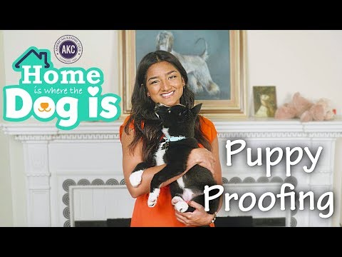 Episode 1 - Puppy Proofing - AKC's Home is Where the Dog is
