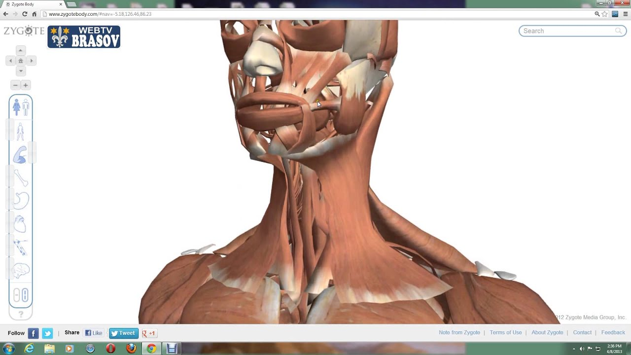 interiorul corpului uman online dating