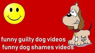 funny guilty dog videos || funny dog shames videos