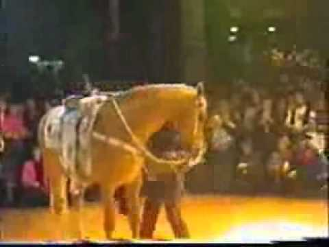 Show with my horse Rico in Berlin.Germany