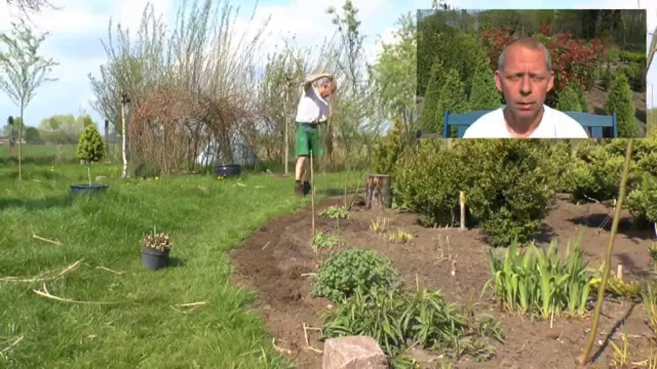 Steckholz. Vermehrung Von Pflanzen