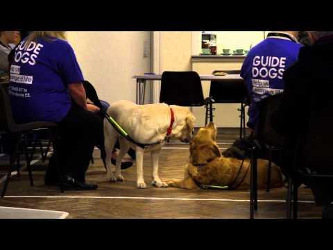 Guide Dog Documentary