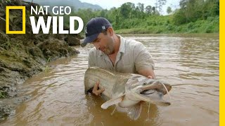 A Large Catfish Is a Good Sign | Monster Fish