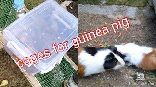 Membuat sangkar arkus tikus belanda/Making a guinea pigs' cage