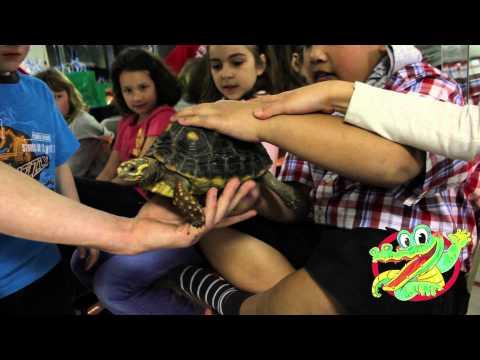 Birthday Parties at Reptilia Zoo, Toronto