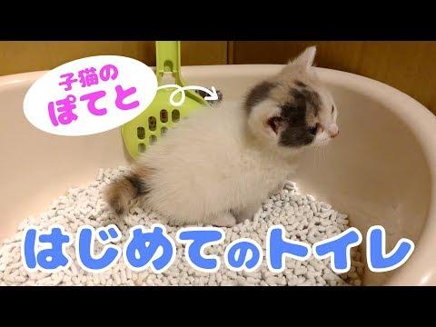 子猫のぽてと・ひとりでトイレできるのか!?