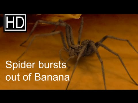 Spider Bursts Out Of A Banana Videos