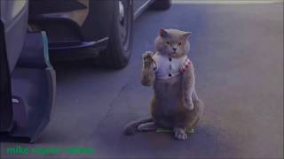 Amazing Funny Animals! make you Laugh Pets Cats Dogs! Happy People Do Funny Stuff!   YouTube