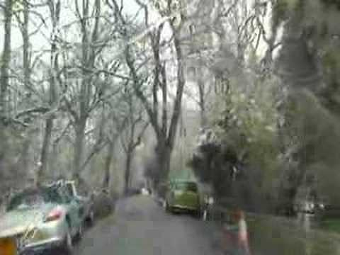 EPPING FOREST. Early April 2008. dr16.