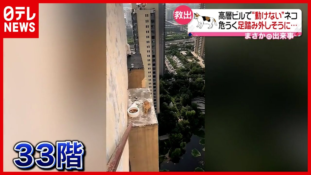 【動けない】高層ビル33階にネコ…果たして救出は 中国