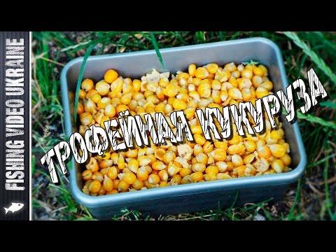 Как запарить кукурузу для рыбалки на карпа видео