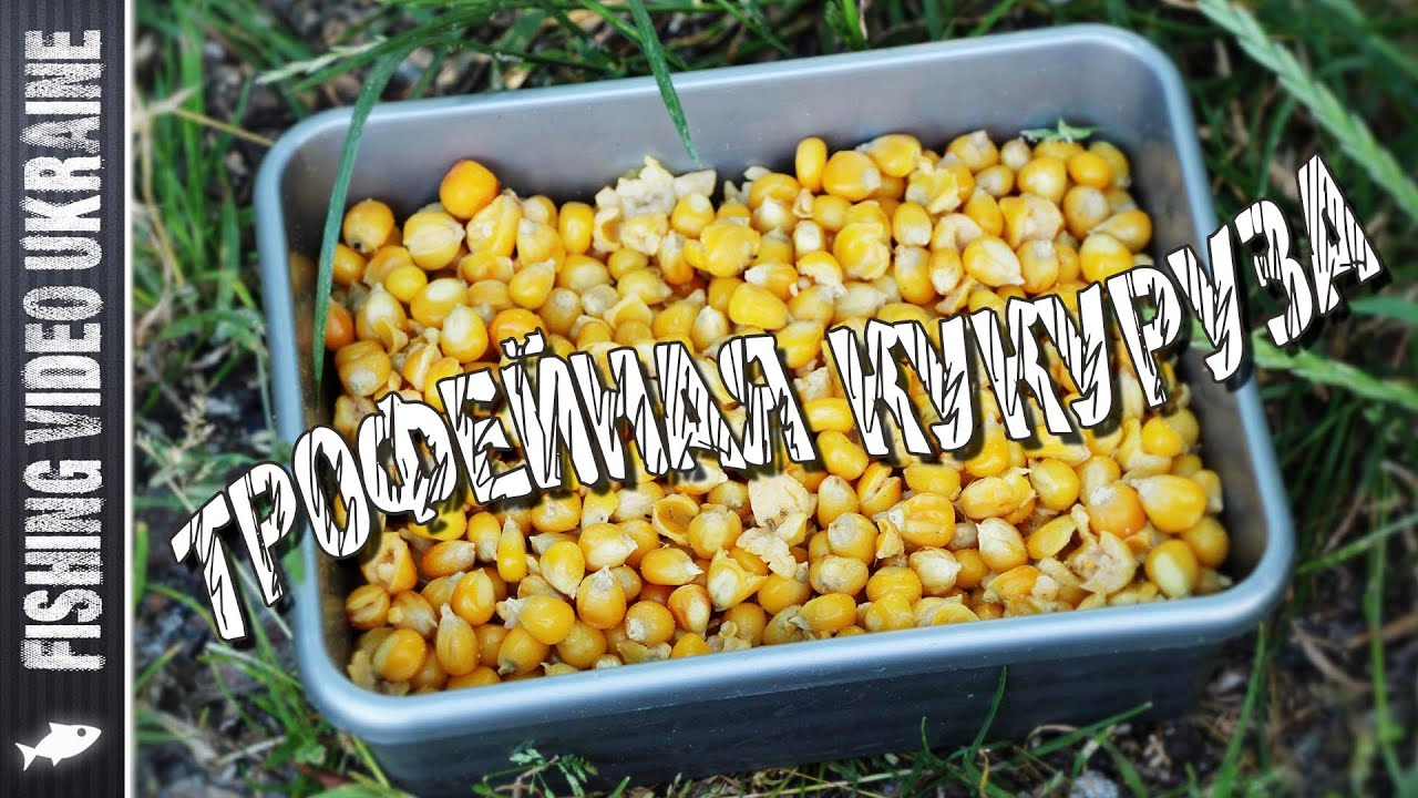 Кукуруза для трофейной рыбы | Ферментация кукурузы | 1080p | FishingVideoUkraine