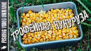 Кукуруза для трофейной рыбы | Ферментация кукурузы | 1080p | FishingVideoUkraine(Подробный рецепт приготовления ферментированной кукурузы. Это отличная приманка для ловли крупной рыбы..., 2016-07-13T16:00:02.000Z)