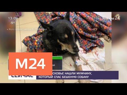 Смотреть фото В Подмосковье нашли мужчину, который спас бешеную собаку - Москва 24 новости россия москва