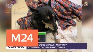 В Подмосковье нашли мужчину, который спас бешеную собаку - Москва 24