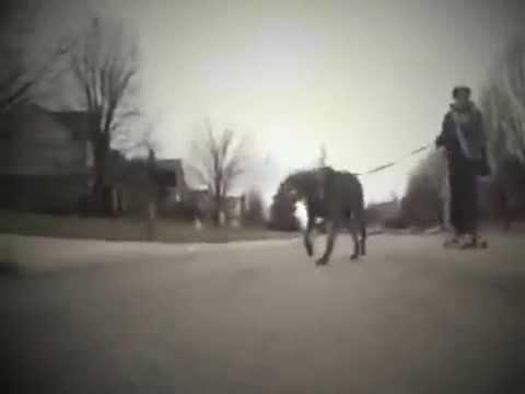 Cincinnati's Best At-Home Pet Care Services - Buddy Boarding