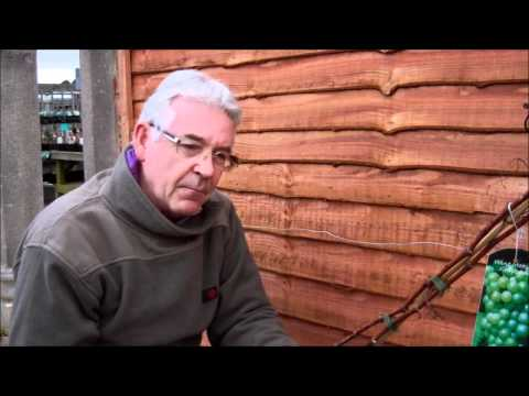 Planting Grape Vines | Growing Grapes Tips | Growing Grapes Guide